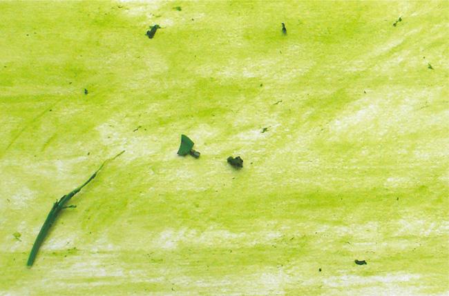 #012 育てる絵 - 緑画からの発信 -  |村山修二郎
