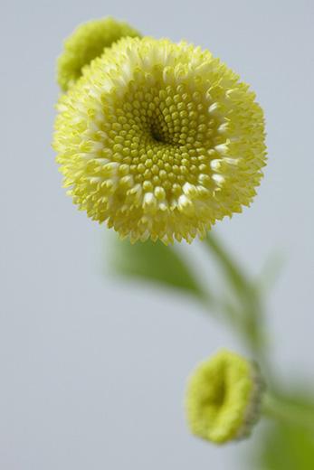花阿彌フラワーデザイン展 花でつくるオブジェ